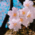 2021.桜